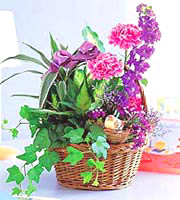 Plants and Flowers Basket