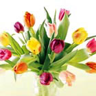 FTD� Carnival Tulips Bouquet