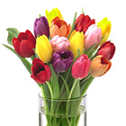 FTD� Bright Lights Tulips