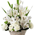 Search our collection of hundreds of beautiful sympathy flowers, and gift basket products that are sure to please, with same-day and next-day professional delivery.