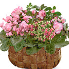 FTD� Pink Assortment Basket