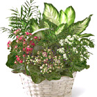 FTD� Rural Beauty Dishgarden