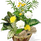 Cheery Basket Planter - Florist Delivery