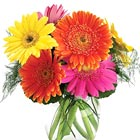 Say 'Thanks,' 'Thinking of You,' 'Have a Great Day,' or 'Feel Better Soon,' with this fresh and festive assortment of Gerbera daisies in a simple vased bouquet. A fanciful, fun way to lift anyone's spirits!