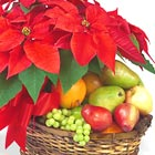 Poinsettia and Fresh Fruit Basket
