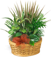 Medium Planter Basket #P404X