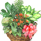 Green Plant Garden Basket