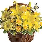 Brighten someone?s whole week with this sunny bouquet of garden fresh lilies, spray roses, alstroemeria, button poms, solidago, or similar fresh flower favorites, designed in a natural basket. Wow! Approximately 12 inches W x 11 inches H. Local florist design and delivery throughout the USA and Canada.