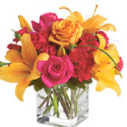 A dazzling combination of bright oranges and pinks in a contemporary compact bouquet just right for a desktop, serving table, or home accent. Includes Asiatic lilies, roses, hot pink carnations, or similar seasonal fresh favorites. Available in most areas late summer and Fall. USA and Canada florist delivery.
