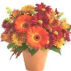 Surprise someone with this colorful bouquet of fresh Autumn flowers designed in a petite flower pot to brighten any Fall occasion. Featured flowers include Gerbera daisies, miniature roses, alstroemeria, daisy poms, solidago, or similar seasonal favorites. Great for a desk, coffee table, end table, or almost anywhere. Available September till Thanksgiving. Style of container may vary in some areas.