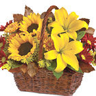 This colorful basket bouquet is great for any Fall occasion and makes a wonderful Thanksgiving centerpiece, too. Featured blooms include sunny sunflowers, lilies, chrysanthemums, solidaster, or similar seasonal fresh favorites. Bursting with color and natural charm! Available September through Thanksgiving. USA and Canada florist delivery.