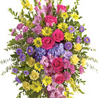 This popular sympathy spray reflects the many colors of life with a rich spectrum of beautiful blooms to honor a cherished loved one. Featured flowers include gladioli, carnations, daisy poms, roses, hydrangea, asters, or similar fresh favorites. Appropriate for wakes, funerals, and memorial services. USA and Canada florist delivery.