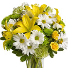Send a little sunshine someone's way with this sunny vased bouquet of petite roses, lilies, and other fresh blooms designed in a cheery yellow, white, and green color scheme. A bouquet of happiness! Great for a birthday, get well, cheer up, thanks, or any sunny sentiment. USA and Canada florist delivery.