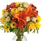 Share the rich colors of the season with this striking vased arrangement of fresh Autumn blooms designed and delivered in a tasteful glass vase. Featured flowers include lilies, roses, alstroemeria, carnations, daisy poms, chrysanthemums, miniature carnations, or similar seasonal fresh favorites. Great for any Autumn occasion. Generally available September through November. Same day and next day florist delivery throughout the USA an Canada.