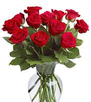 12 Roses Vased #TFDRV