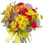 Cheery fresh seasonal blooms, such as daisy poms, alstroemeria, miniature carnations, and poms or asters, in a compact vased bouquet. Sure to brighten anyone's day. Great for a birthday, get well, thanks, congratulations, or just because. Nationwide florist delivery in the USA and Canada.