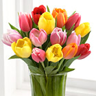 Rush of Color Tulip Bouquet with Vase