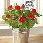 FTD� Bright Happy Birthday Mini Rose