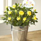 FTD® Precious Baby Mini Rose Plant