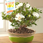 FTD� Celebrate You Gardenia Bonsai