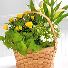 FTD� Cheerful Wishes Blooming Basket
