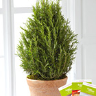 FTD Rosemary Riches Tree
