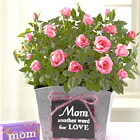 Mom is Love Mini Rose with Chocolates