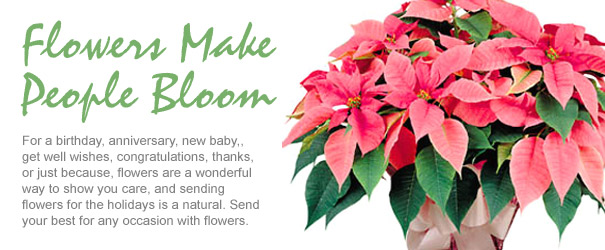 Send Flowers for Christmas