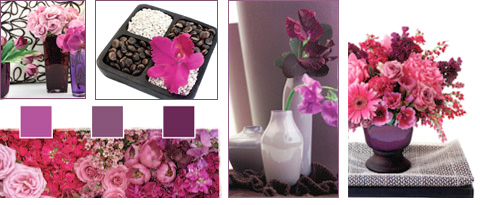 Flowers Trends - Plum Infusion