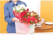 Tulips Flower Care And Arranging