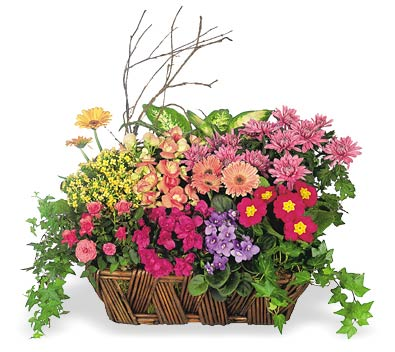 Euro Garden Virtual Bouquet