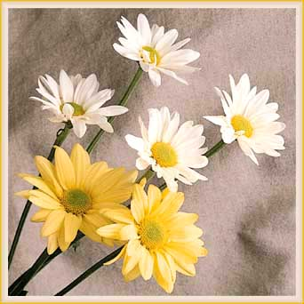 Virtual Daisy Bouquet