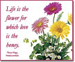 Life is the flower...