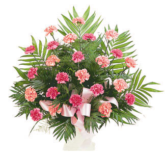 Pink Carnations Tribute