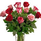 FTD� True Romance Dozen Roses Vase