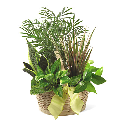 FTD French Garden Planter