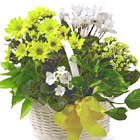 FTD® Bit of Sunshine Plants Basket