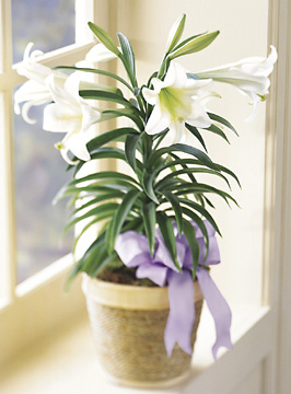 FTD® Easter Lily