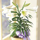 FTD� Easter Lily