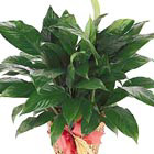 International - Green Plant Gift