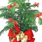 Holiday Green Plant