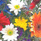 Birthday Flowers Bouquet Special
