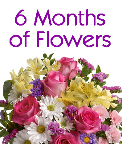 6 Months of Flowers