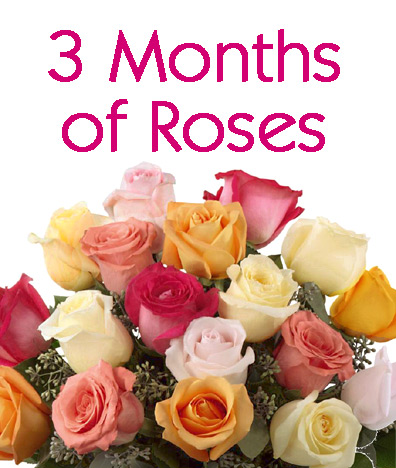 3 Months of Roses