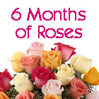 6 Months of Roses