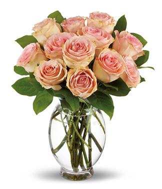 Teleflora Delicate Dozen Roses