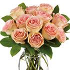 Teleflora�  Delicate Dozen Roses