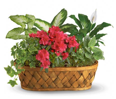 1-800-FLORALS coupon: Plants Galore Basket