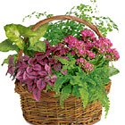 Secret Garden Plants Basket