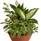 Serene Retreat Green Plants Planter
